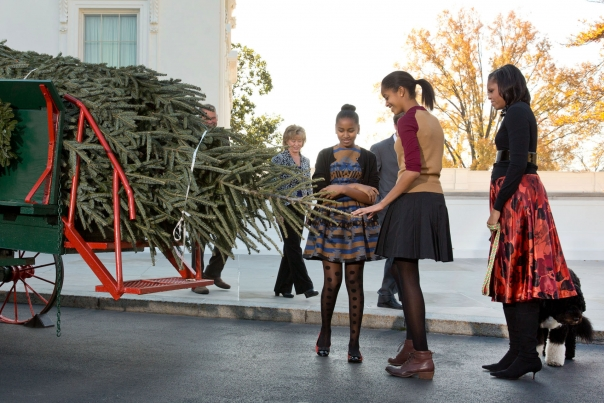 White House Christmas Tree 2012 - Not yet Decorated