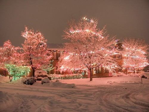 Stunning pastel pink Christmas lights decorate a yard full of trees
